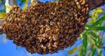 Comment réagir devant un essaim d'abeilles ?